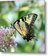 Eastern Tiger Swallowtail 2 Metal Print