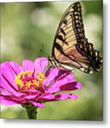 Eastern Tiger Swallowtail 2016-1 Metal Print