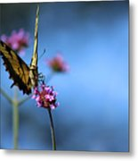 Eastern Tiger Swallowtail And Blue Sky Metal Print