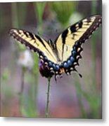 Eastern Tiger Swallowtail Butterfly In Garden 2016 Metal Print