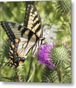 Eastern Tiger Swallowtail Metal Print
