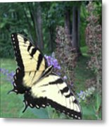 Eastern Tiger Swallowtail Sipping Nectar Metal Print