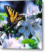Eastern Tiger Swallowtail Metal Print by Thomas R Fletcher