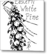 Eastern White Pine Cone On A Branch Metal Print