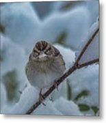 Eating Snow Metal Print