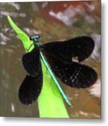 Ebony Jewel Damselfly Metal Print