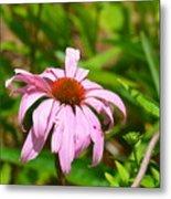 Echinacea 16-02 Metal Print