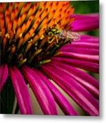 Echinacea And Syphrid Metal Print
