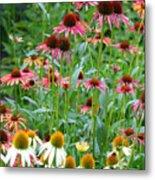 Echinacea Multi Mix Metal Print