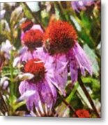 Echinacea Watercolor 2015 Metal Print
