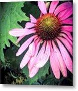 Echinacia Flower In The Rain Metal Print