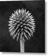 Echinops Monochrome Metal Print