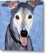 Eddie - Greyhound Metal Print