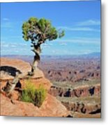 Edge Of The Cliff Metal Print