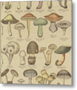 Edible And Poisonous Mushrooms Metal Print