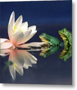 Edible Frog Rana Esculenta Two Frogs Metal Print