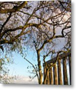 Edinburgh - Caption Hill Trees Metal Print