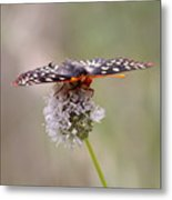 Edith's Checkerspot Four Metal Print