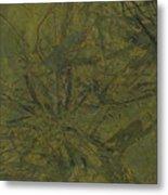 Edition 1 Kelp Metal Print
