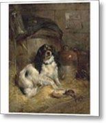 Edwin Douglas 1848-1914 A Cavalier King Charles Spaniel Metal Print