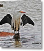 Egret And Cormorant Wings Metal Print