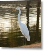 Egret At Waters Edge Metal Print