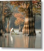 Egret Enjoying Foggy Morning In Atchafalaya Metal Print