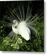 Egret Fan Dancer Metal Print