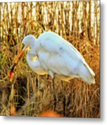 Egret Fishing In Sunset At Forsythe National Wildlife Refuge Metal Print