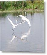 Egret Flight Metal Print