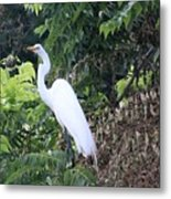 Egret In A Tree Metal Print