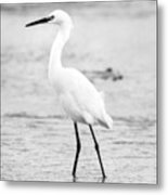 Egret In Black And White Metal Print