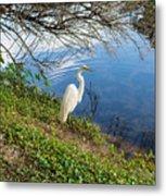 Egret In Florida Color Metal Print