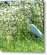 Egret In Flowers Metal Print