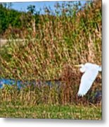 Egret In The Marsh Metal Print