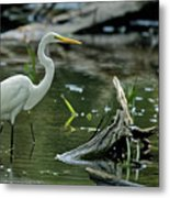 Egret In The Swamp Metal Print