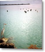 Egret On Marathon Key Metal Print