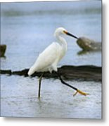 Egret Step Metal Print