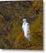 Egret Surrounded By Golden Leaves Metal Print