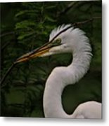 Egret With Branch Metal Print
