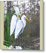 Egrets And Cypress Pond Metal Print by Kevin Brant