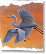 Egrets Great And Snowy Metal Print