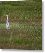 Egrets In A Field Metal Print