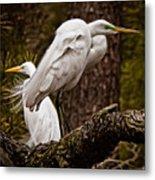 Egrets On A Branch Metal Print