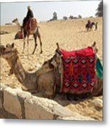 Egypt - Camel Getting Ready For The Ride Metal Print