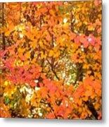 Elegant  Autumn Metal Print