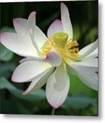 Elegant Lotus Metal Print