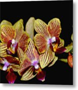 Elegant Orchid On Black Metal Print