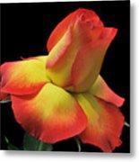 Elegant Rose. Metal Print