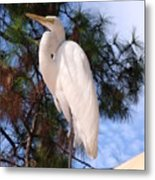 Elegant White Crane Metal Print
